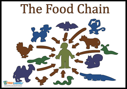 Food Web Blank Template - Imgflip Regarding Blank Food Web Template For Blank Food Web Template