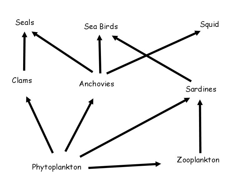 gtukwem: rainforest food chain diagram Within Blank Food Web Template Intended For Blank Food Web Template