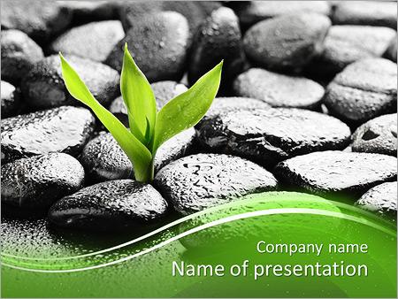 Zen basalt stones and bamboo with dew PowerPoint Template & Infographics  Slides Regarding Presentation Zen Powerpoint Templates Pertaining To Presentation Zen Powerpoint Templates